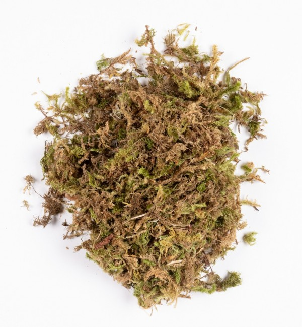 Moss in bag n.1216 (40 gr.)