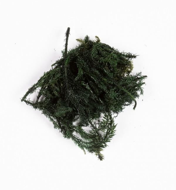 Green bushes in bag n.1220 (10 gr.)